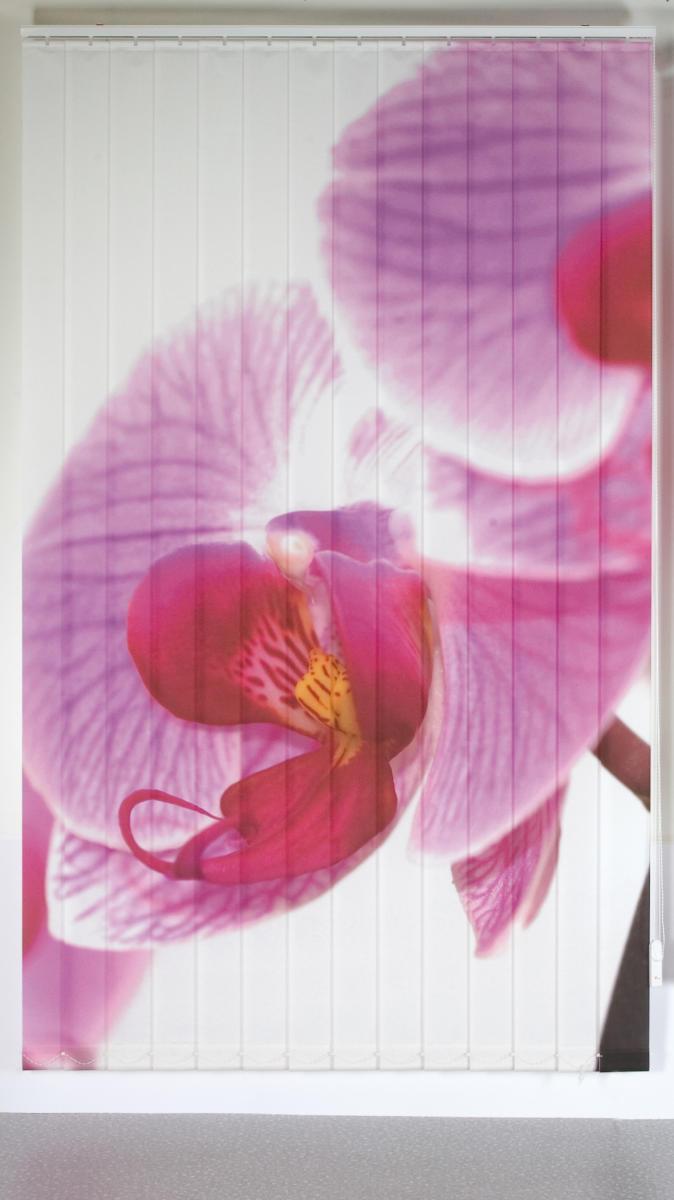 Orchidee gerade