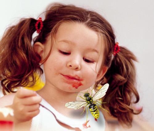 Insektenschutz4